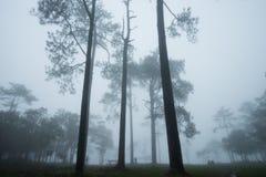 Waldweg mit Kiefer und Nebel Lizenzfreies Stockbild