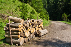 Waldweg mit logpile Lizenzfreies Stockfoto