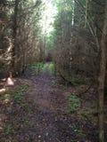 Waldweg mit Moos und Farn umgeben durch hohe Bäume stockfoto