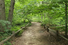 Waldweg mit Zaun lizenzfreie stockbilder