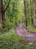 Waldweg nach einem Frühlingsregen lizenzfreies stockbild