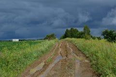 Waldweg nach Regen lizenzfreie stockbilder