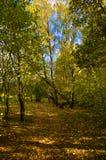 Waldweg nahe Oka Fluss, Russland lizenzfreie stockbilder