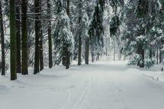 Waldweg schneebedeckt nach einem Schneesturm, schöne Landschaft stockfotos