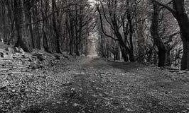 Waldweg in Schwarzweiss lizenzfreies stockfoto
