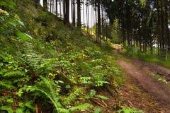 Waldweg und -abhang mit Anlagen Stockfoto