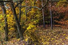 Waldweg und farbige Blätter auf Bäumen Stockfoto