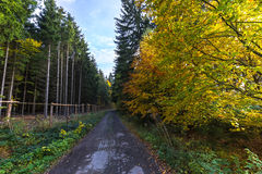 Waldweg und farbige Blätter auf Bäumen Stockbild