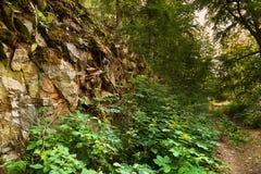 Waldweg und -felsen bedeckt mit Moos Stockfotografie