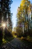 Waldweg voll des Herbstlaubs Stockfotografie