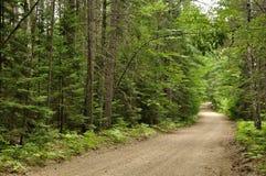 Waldweg zum rustikalen Campingplatz stockfotos