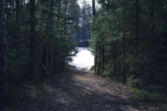 Waldweg zum See lizenzfreie stockfotografie