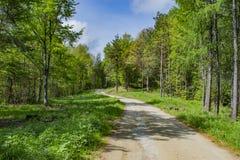 Waldweg zur Hütte stockfotos
