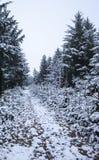 Waldwegabdeckung im Schnee Stockbilder