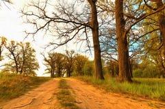 Waldwege auf hügeligem Gelände im Wald Stockfotos