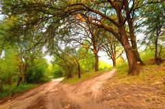 Waldwege auf hügeligem Gelände im Wald Stockfotografie