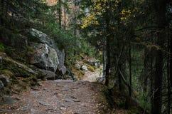 Waldweghoch nach den Bergen im Tatry lizenzfreie stockfotografie