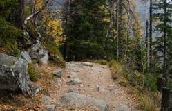 Waldweghoch nach den Bergen im Tatry lizenzfreies stockbild