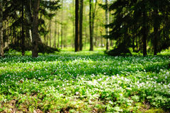 Waldwiese stockfoto