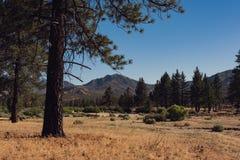 Waldwiese, die ruhig und ruhig ist- lizenzfreie stockfotos