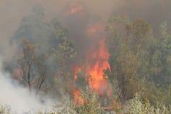 Waldwildes Feuer Stockfoto