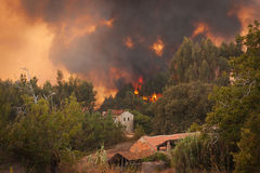 Waldwildes Feuer nahe Häusern Stockbild