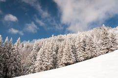 Waldwinterlandschaft lizenzfreie stockbilder