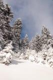 Waldwinterlandschaft lizenzfreie stockfotografie