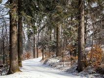 Waldwinterweg in der Zeit lizenzfreies stockbild