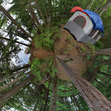 Waldzelt-Kampieren Stockfotos