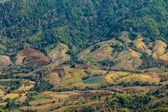 Waldzerstörung auf dem Berg Stockbilder