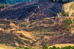 Waldzerstörung auf dem Berg Lizenzfreies Stockfoto