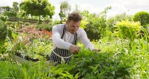 Wale gardener working with plants stock video