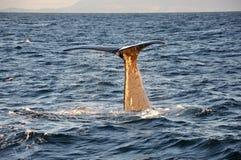 Walendstückabschluß oben, Nordsee stockfoto