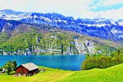 Walensee lake shore farm view Switzerland. Grazing cattle on spring green along barn lake Walensee  in Alps mountains,Quarten St Gallen canton, Switzerland.Photo Stock Photos