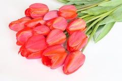 Walentynek lub matek dnia tulipanu karta - Akcyjna fotografia Zdjęcia Royalty Free