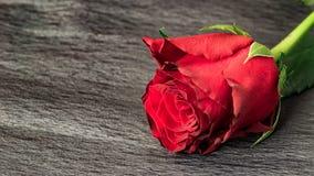 Walentynka dnia świętowanie obraz stock