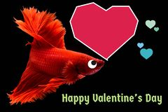 Walentynka dnia karta z sercem na betta ryby tle obrazy stock