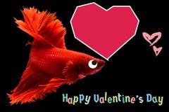 Walentynka dnia karta z sercem na betta ryby tle zdjęcia stock
