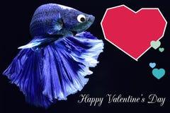 Walentynka dnia karta z sercem na betta ryby tle zdjęcie royalty free