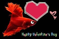 Walentynka dnia karta z sercem na betta ryby tle fotografia royalty free
