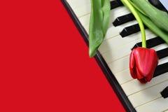 Walentynka dnia prezent, walentynka dnia kwiat na fortepianowej klawiaturze Obrazy Royalty Free