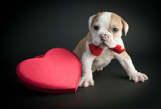 Walentynka dnia szczeniak fotografia royalty free