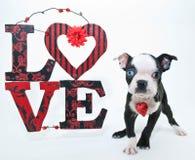 Walentynka dnia szczeniak obrazy royalty free