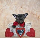 Walentynka dnia szczeniak fotografia stock