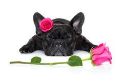 Walentynki miłości choroby pies Obraz Royalty Free