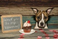 Walentynki ` s pies fotografia stock