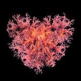 Walentynki serce robić korale (Dendronephthya hemprichi) Fotografia Royalty Free