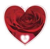 Walentynki serce zawiera czerwieni róży fotografia stock