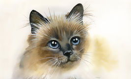 Walercolor-Sammlung: Katze Stockfotos